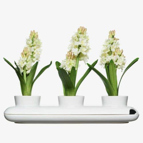 Trio Herb Pot White #birthdaygifts